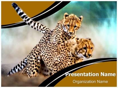 African cheetah powerpoint template background 1g toneelgroepblik Images