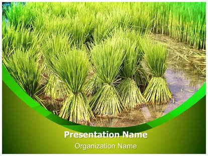 Farming rice cultivation powerpoint template background 1g toneelgroepblik Image collections
