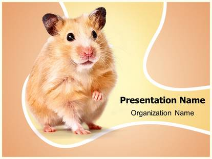 hamster-powerpoint-template-design-low-big-1-2073-1 Open Office Newsletter Template on fun company, classroom weekly, free printable monthly, free office, microsoft word,