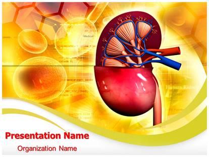Human kidney powerpoint template background subscriptiontemplates 1g toneelgroepblik Gallery