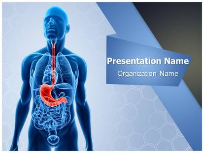Human stomach powerpoint template background 1g pronofoot35fo Gallery