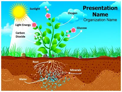 Plant Photosynthesis Powerpoint Template Background