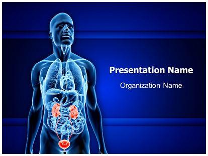 urinary system powerpoint presentation